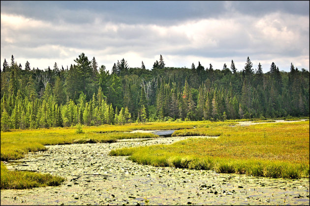 Algonquin Provincial Park - moeras