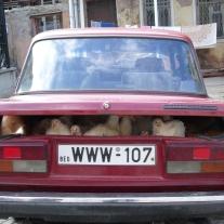 '305596' door cPlug
