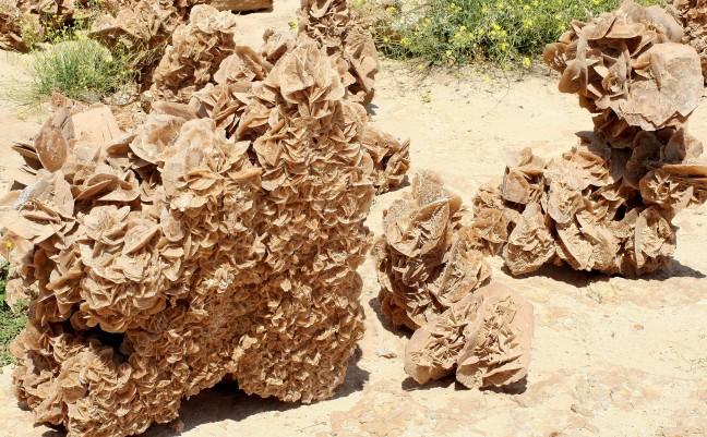 Woestijnroos