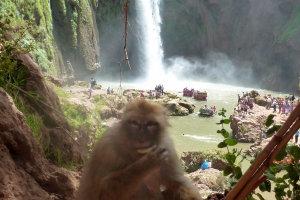 Berberaapje en waterval