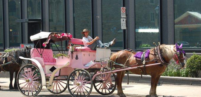 Koetsier en paard