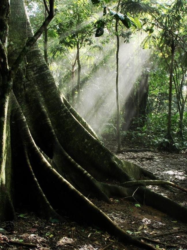 Zonnestralen op een figtree