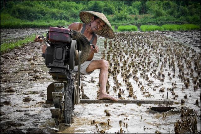 Landarbeid in Yangshuo