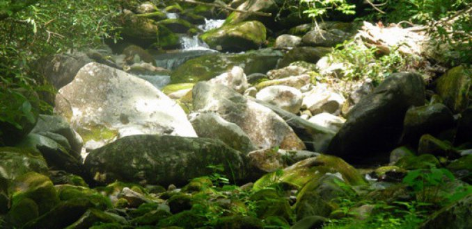 Groen in Smokey Mountains
