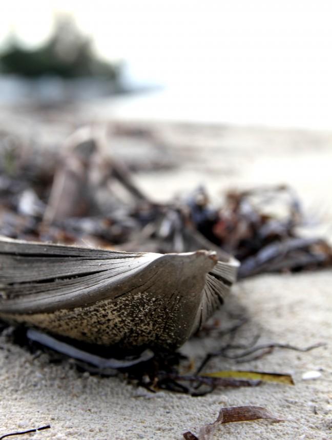 Palmblad op het strand op de bahama's