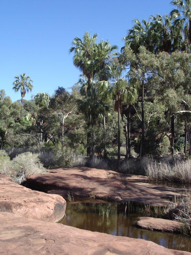 Palm Valley Finke NP