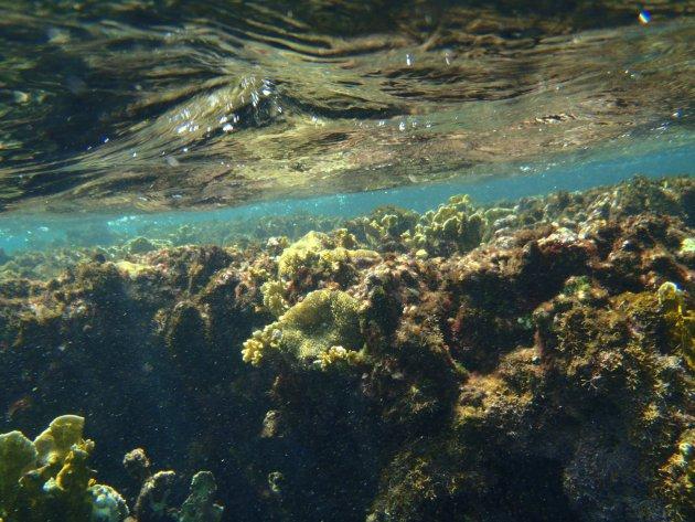 Wateropppervlak met rif