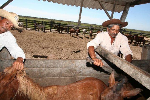 Ranch Pantanal 1