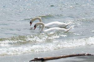 samen op het water