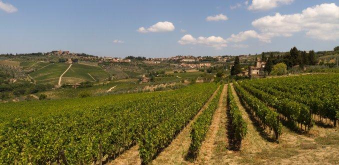 Wijngaarden in de Chianti-streek