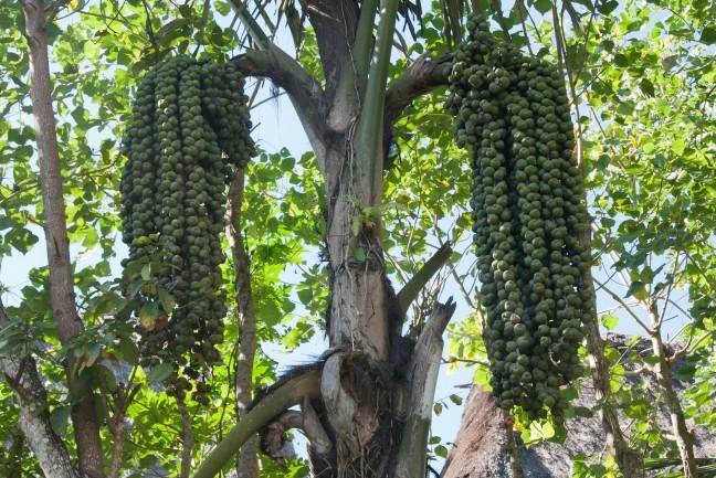 Opsproring verzocht: welke vruchten zijn dit?