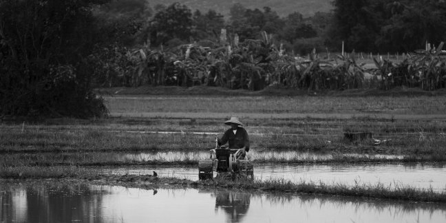 Ricefield worker