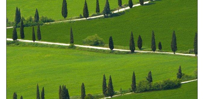 Laan van Cypressen - Toscane