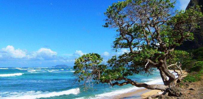 Noord-Oost kant van Oahu - Hawaii