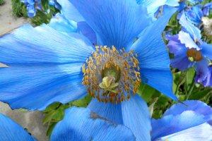 botanische tuin; Akureyri