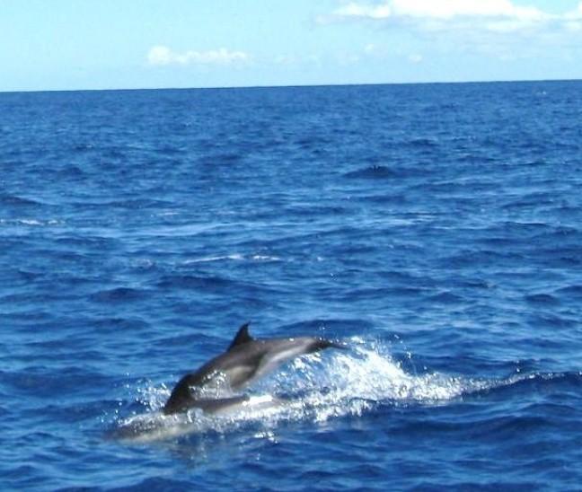 ook een tochtje om dolfijnen te zien mag niet ontbreken