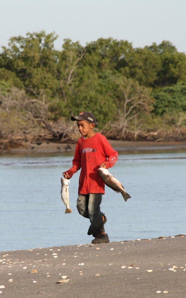 Jonge visser