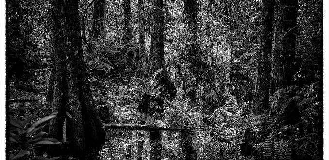 corkscrew sanctuary swamp