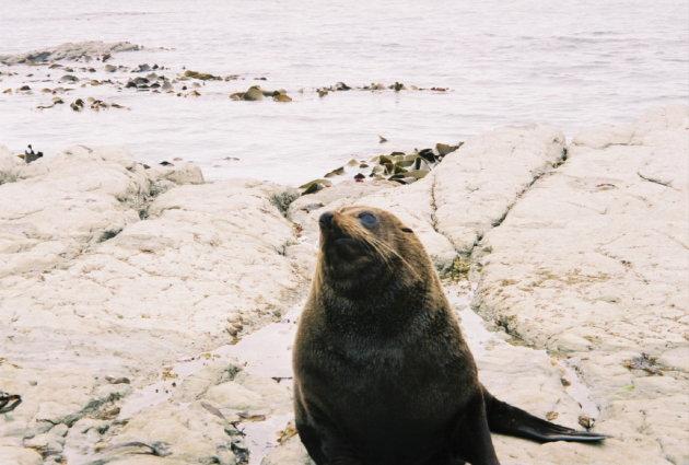 Seal's Rock, Kaikoura