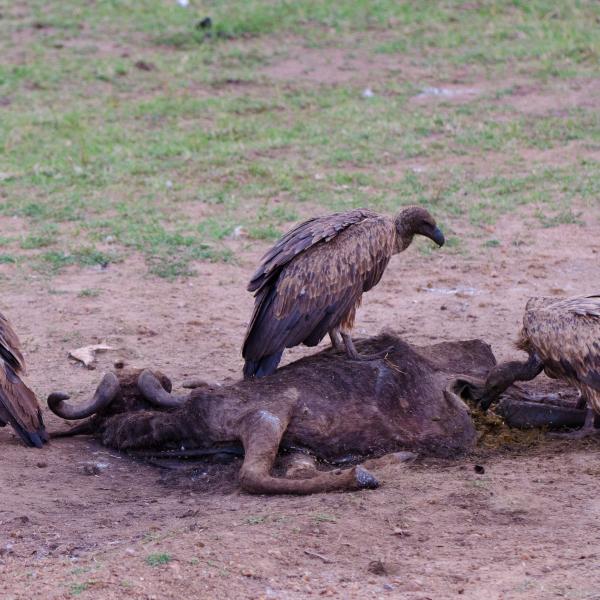 '332880' door vulture1960