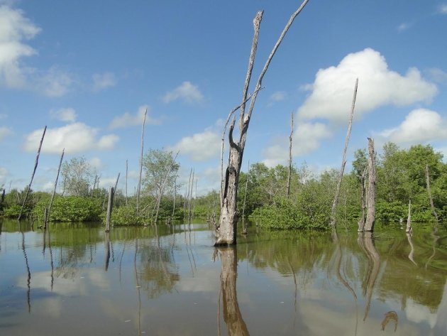 In het waterbeheersgebied Bigi Pan