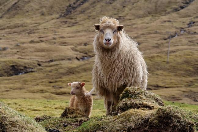 Moeder en kind op de Faeroer eilanden