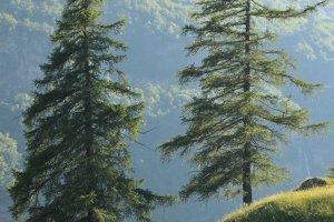 Bomen verlicht