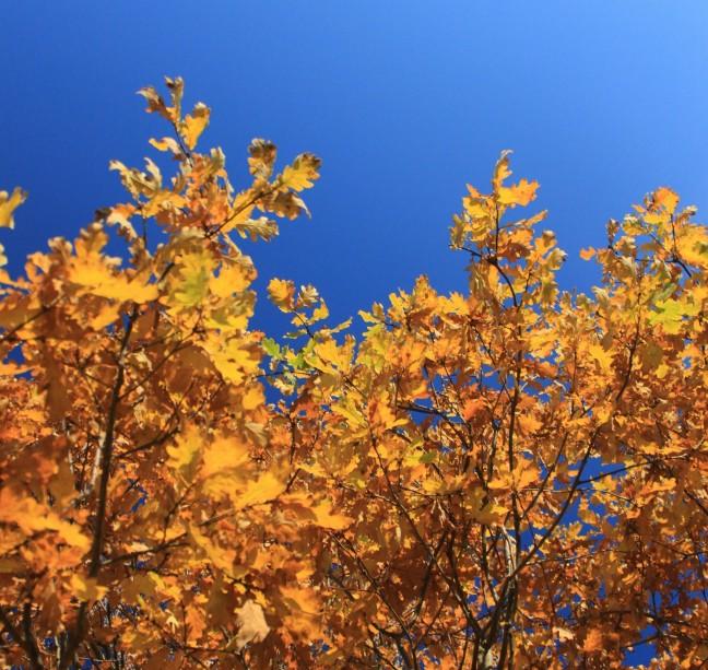 True Colours  -Cindy Lauper-