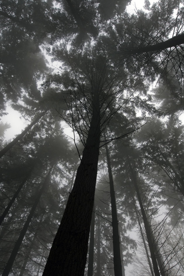 A misty forest