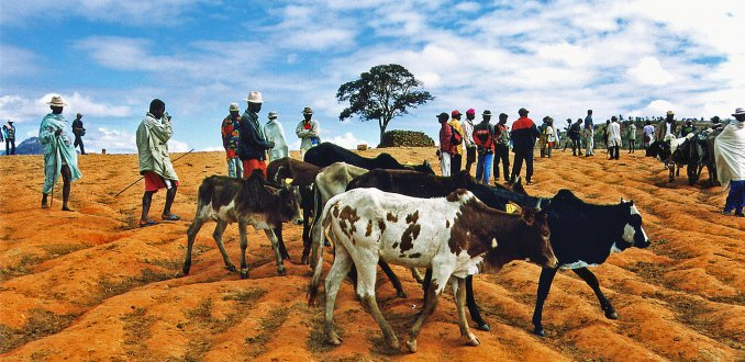 Betsileo zeboemarkt