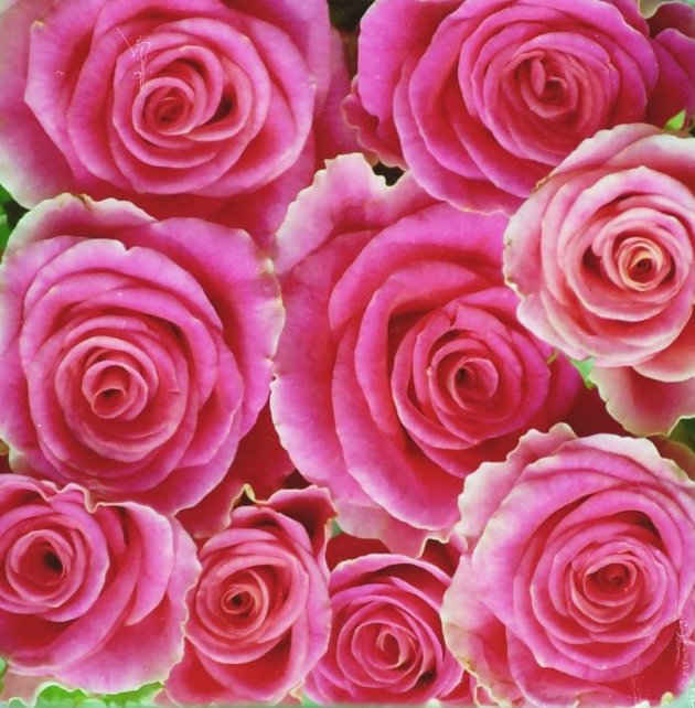 Een bosje rozen