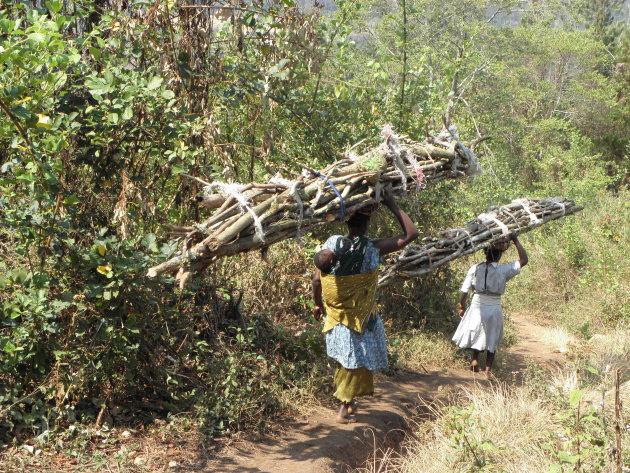 Malawiaanse vrouwen dragen takkenbossen de berg af