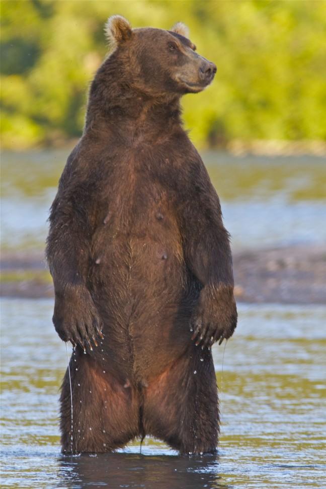 beren zalm Kamtsjatkaa