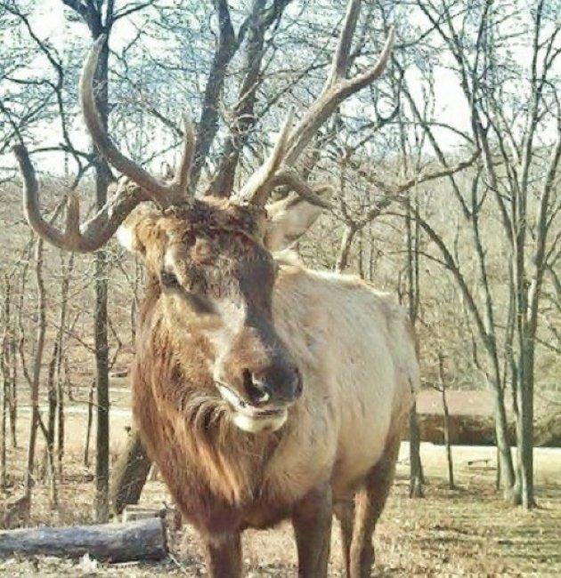 Lone Elk State Park