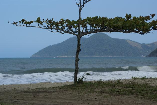 bonsai-boompje langs strand