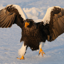 '356162' door Harry-Eggens