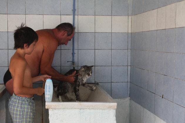 varkentje wassen