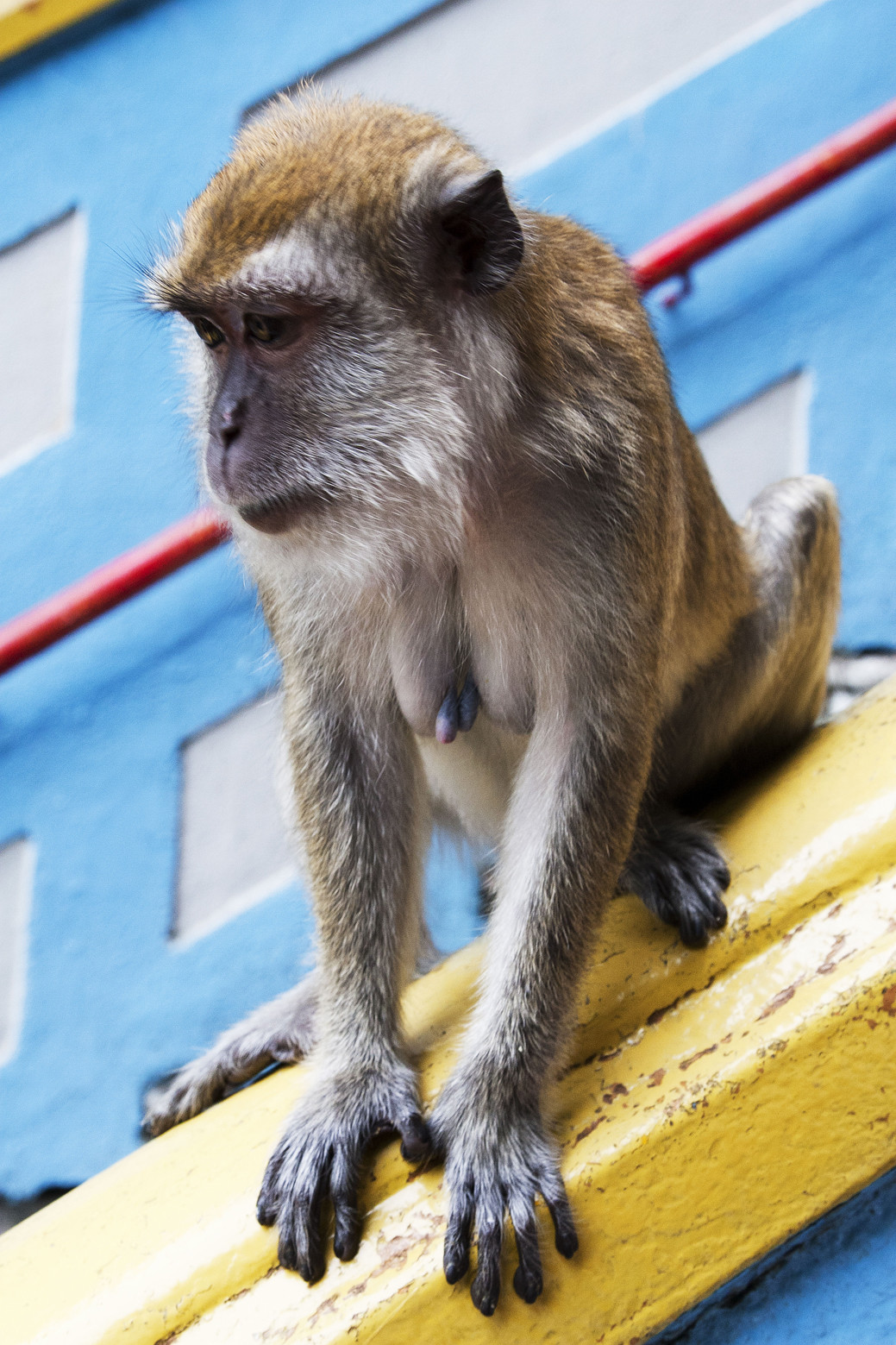 7532e5dbfcf Kuala Lumpur - Toen kwam de aap uit de mouw...   Columbus Travel