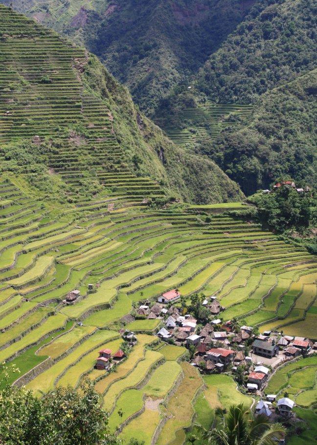 Rijstterrassen, Batad