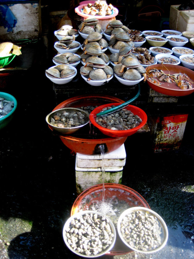 Piles of shells
