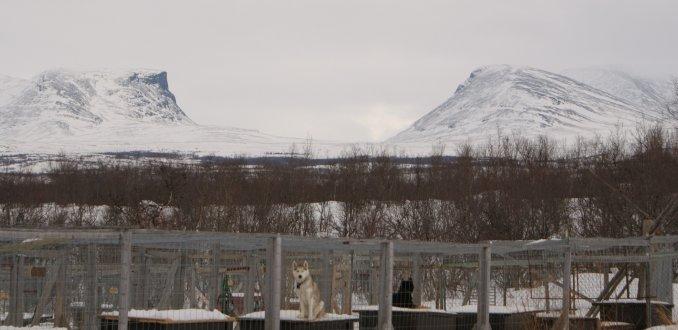 hondenkennel bij het Abisko Fjallturer Hostel, Lapland, Zweden