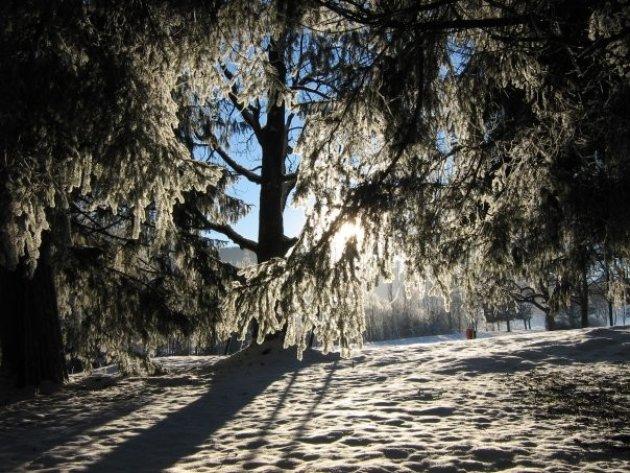 winterlicht door de bomen