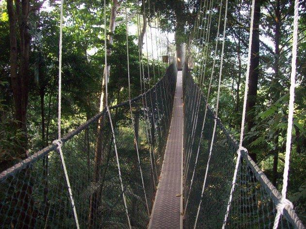 Canopy walk in Taman Negara