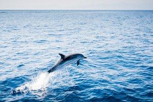 Dolfijnen in Europa