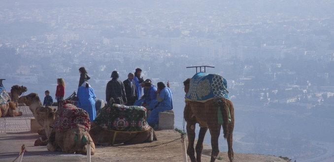 Kamelen bij het Fort in Agadir