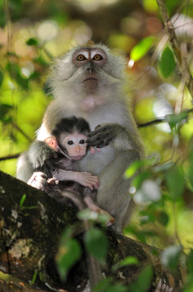 Rimpelig jong makaakje