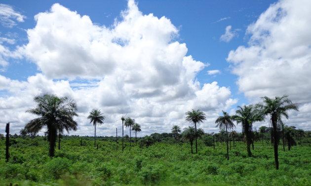 Africa's greenest