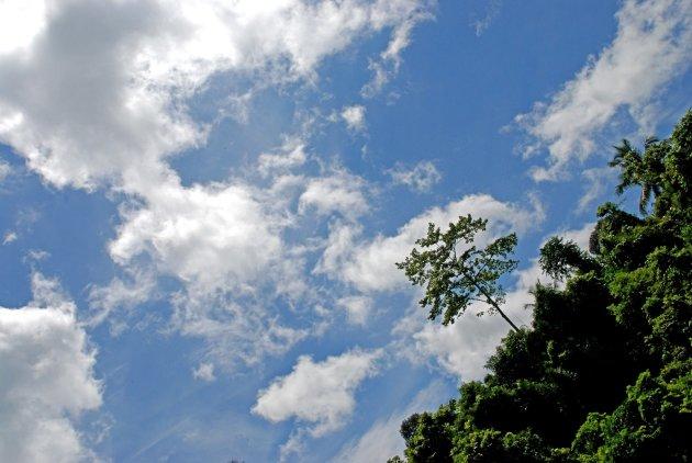 Eenzame boom met een mooie lucht