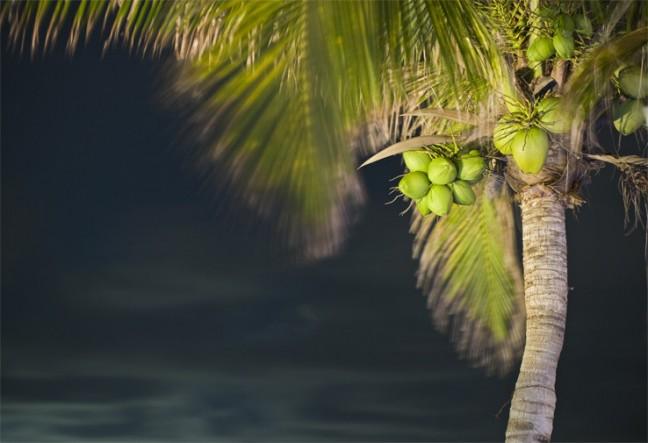 Een palmboom aan het strand in yucatan