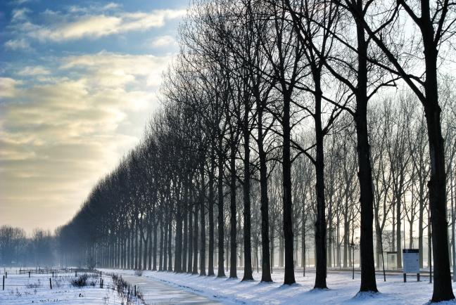 Bomenrij in ochtendlicht